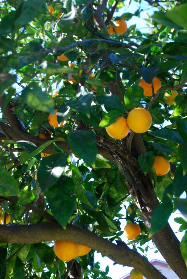 citrus branches
