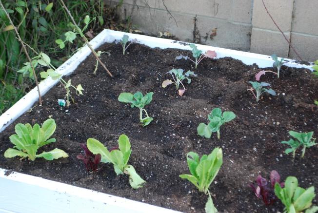 urban garden box