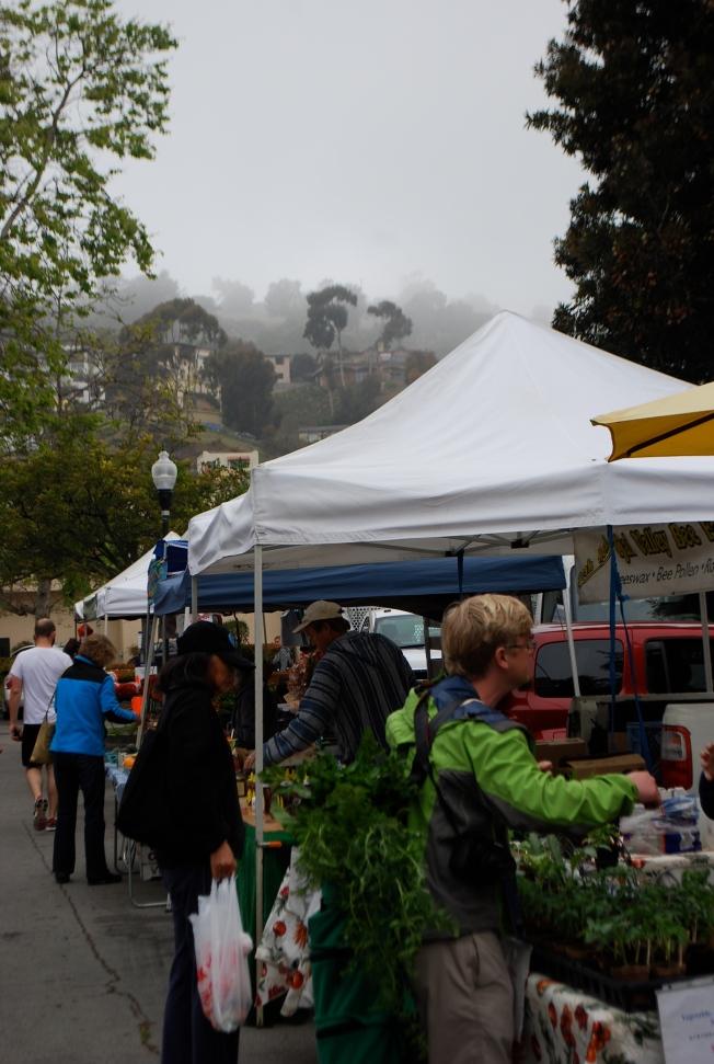 foggy farmers market