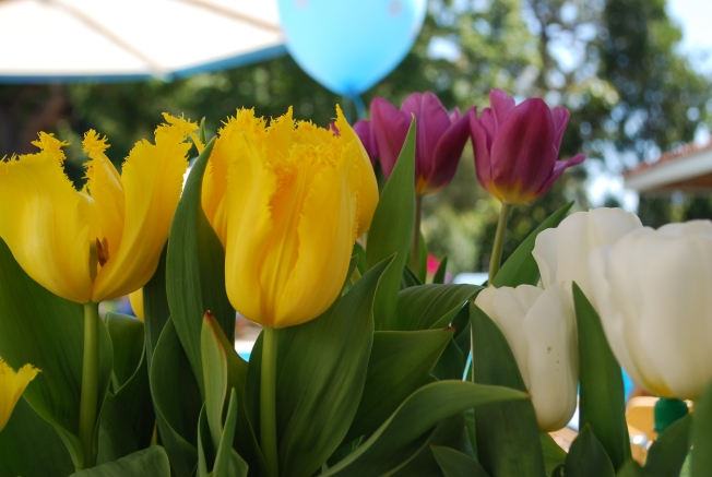 tulips birthday