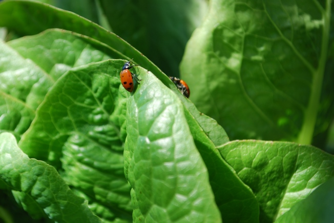 lady bug 1