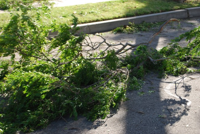 branches down