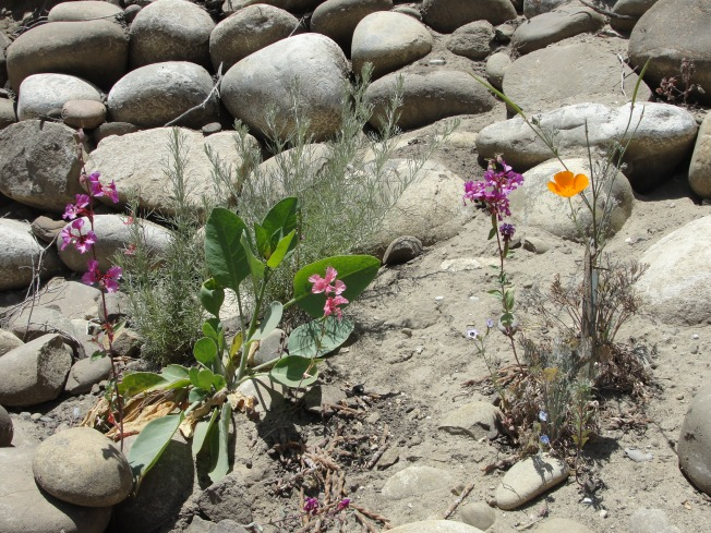 wild flowers in rocks