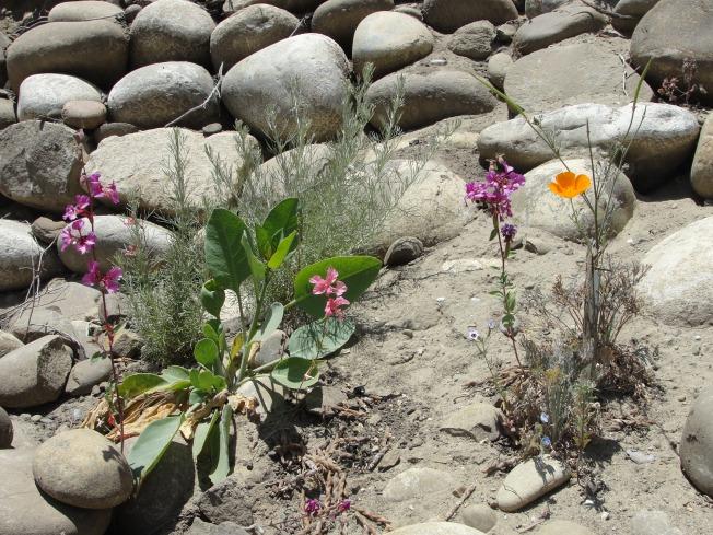 wild flowers in rocks