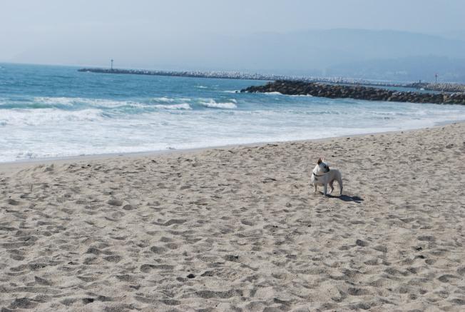 char at the beach