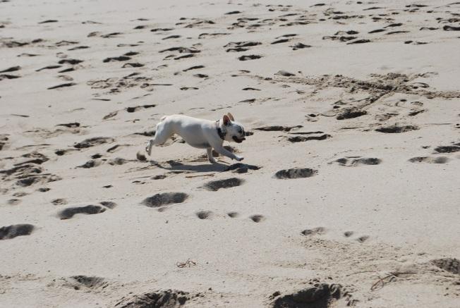 char loves the beach