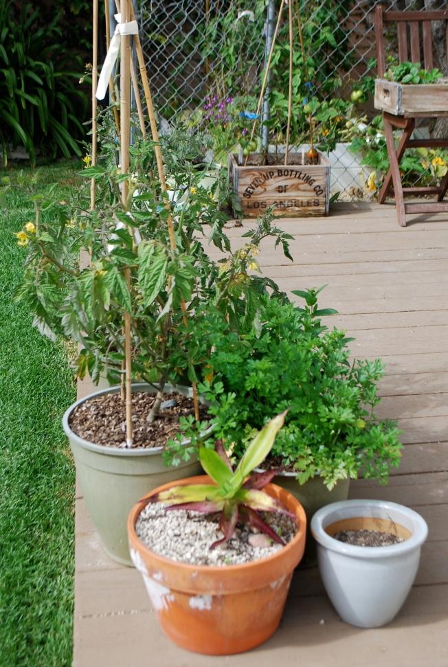 julys garden