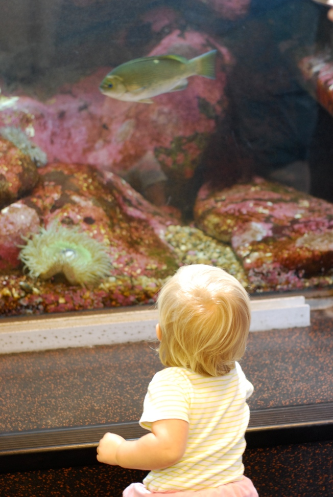 seeing the fish