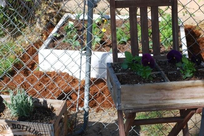 a new garden