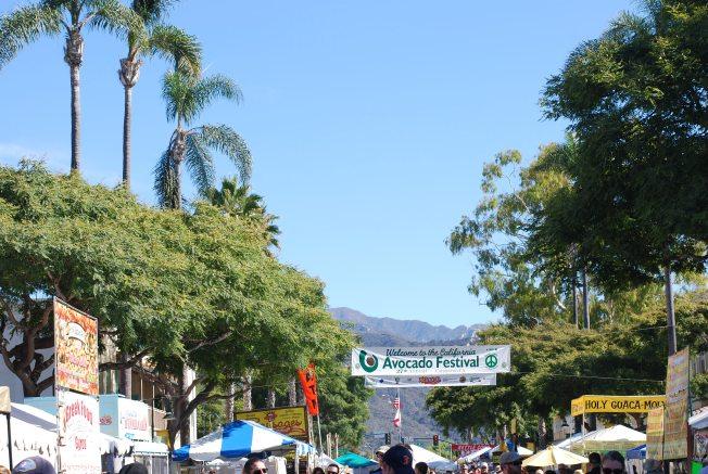 avo festival
