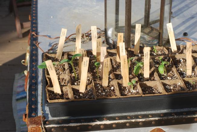 seedlings in the sun