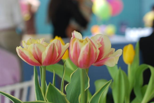 spring bday