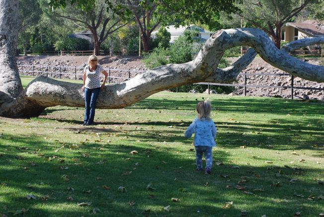 tree fun