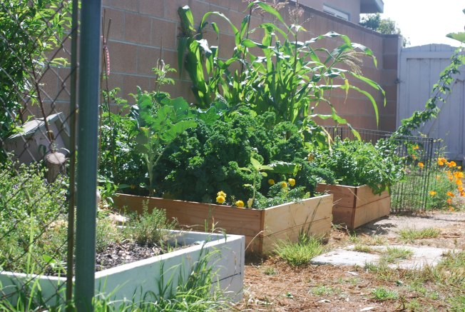 garden late june