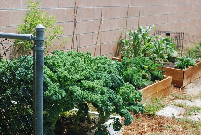 the june garden