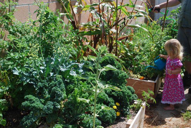 the whole garden