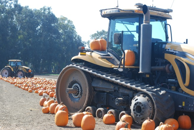 pumpkin patch tractor
