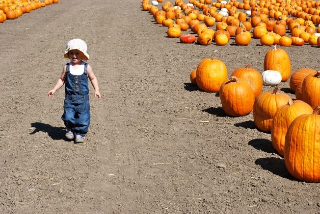 walking through pumpkins