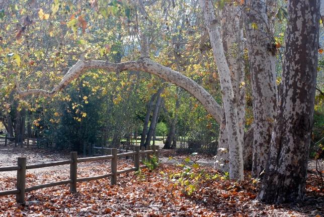 foster park
