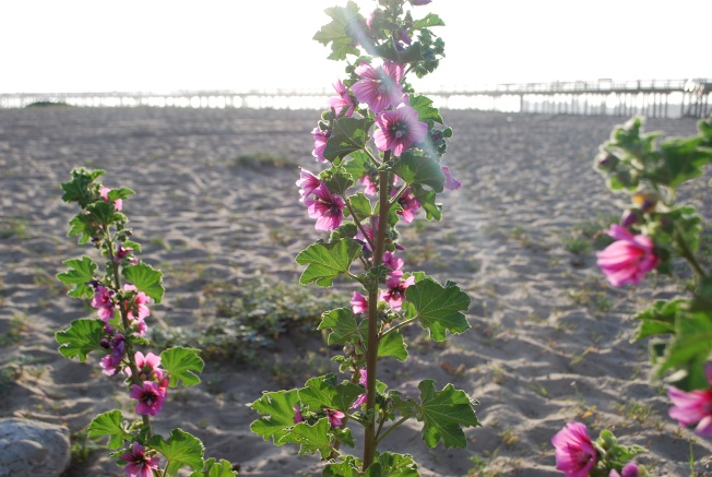 pretty beach flowers