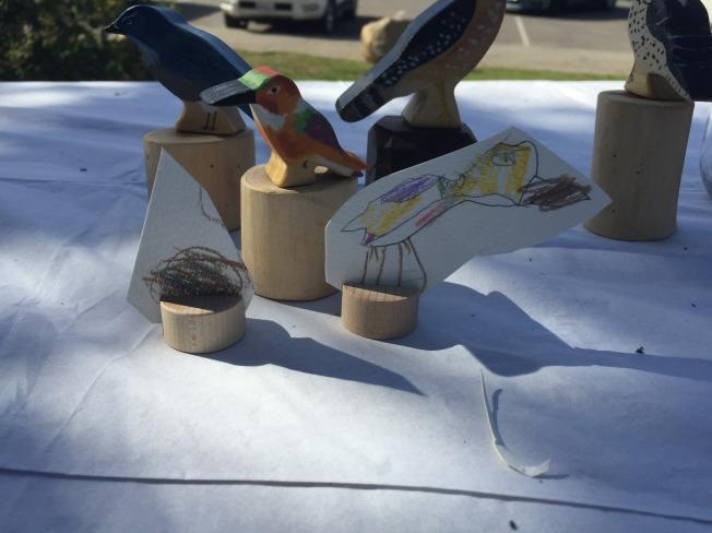 birdstudy11